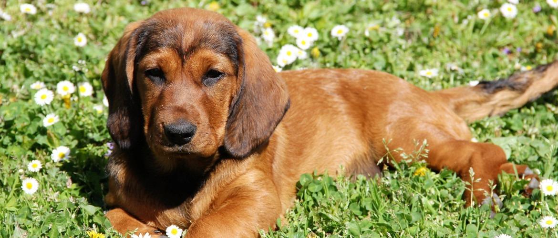 Nora von der Kesselwand - Hundeführer und Besitzer: Erich Dreier aus der Schweiz